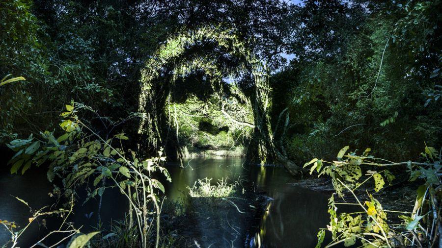 Du Street art au coeur de la forêt amazonienne