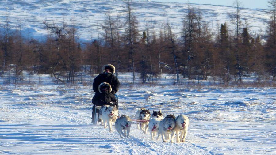 Planer en traîneau à chiens au Nunavik
