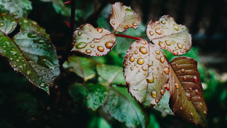 Randonner sous la pluie : 9 conseils pour choisir son équipement imperméable