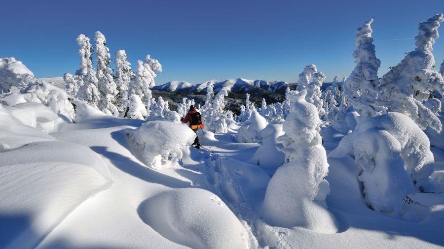 6 randonnées parmi les fantômes de neige