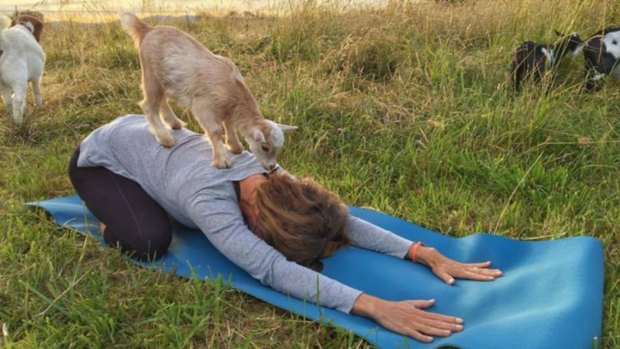 Jusqu'où ira le yoga ?