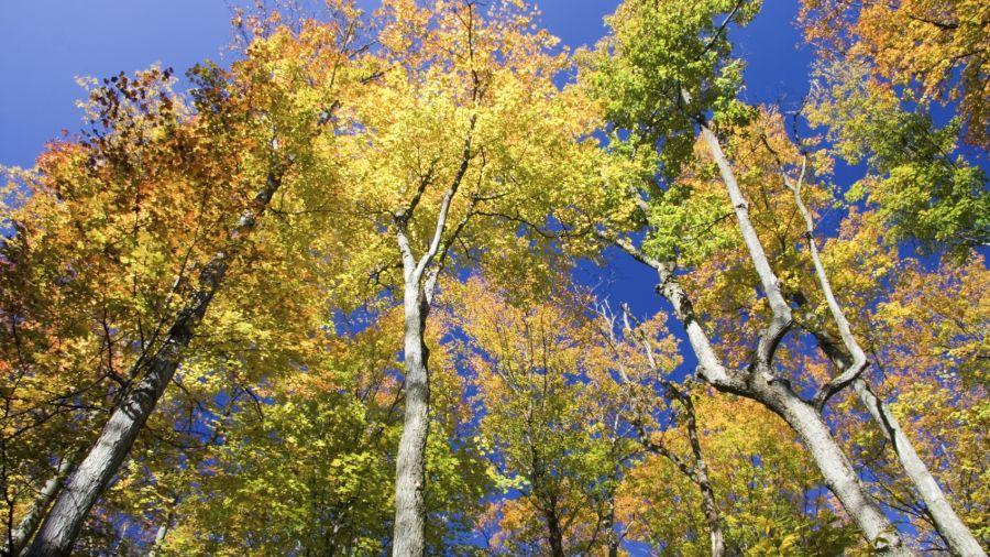 Randonnées automnales idéales : Parc national d'Aiguebelle