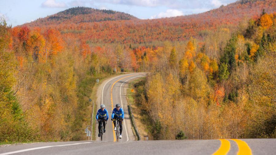 Vélo de route sous les feuilles d'automne