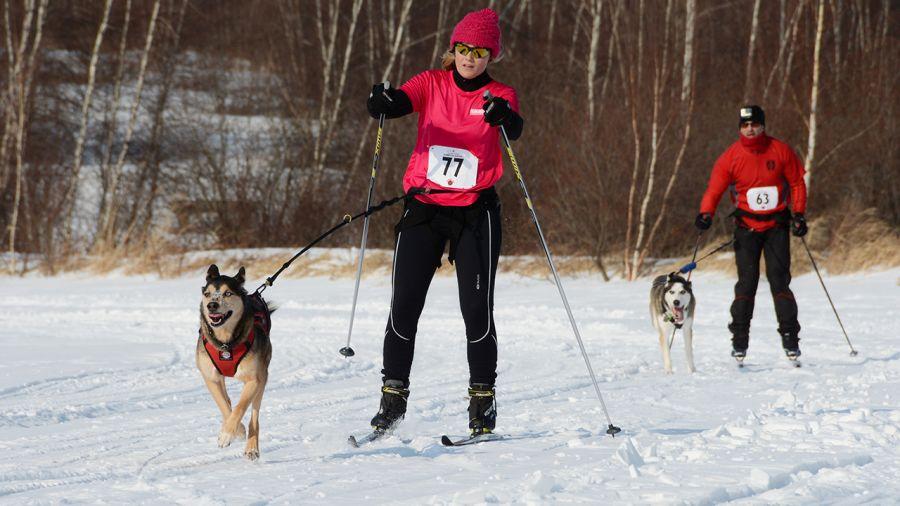 Chienne de vie : rando hivernale, skijoring et canicross