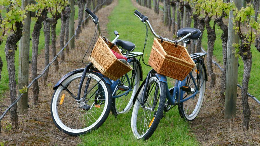 La Route des vins à vélo: Vignoble de l'Orpailleur