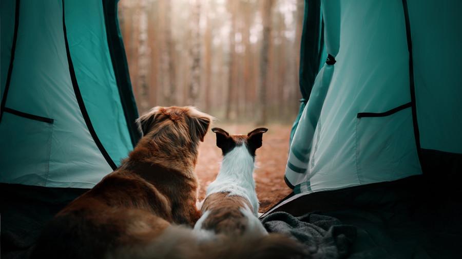 Conseils pour du camping réussi avec son chien