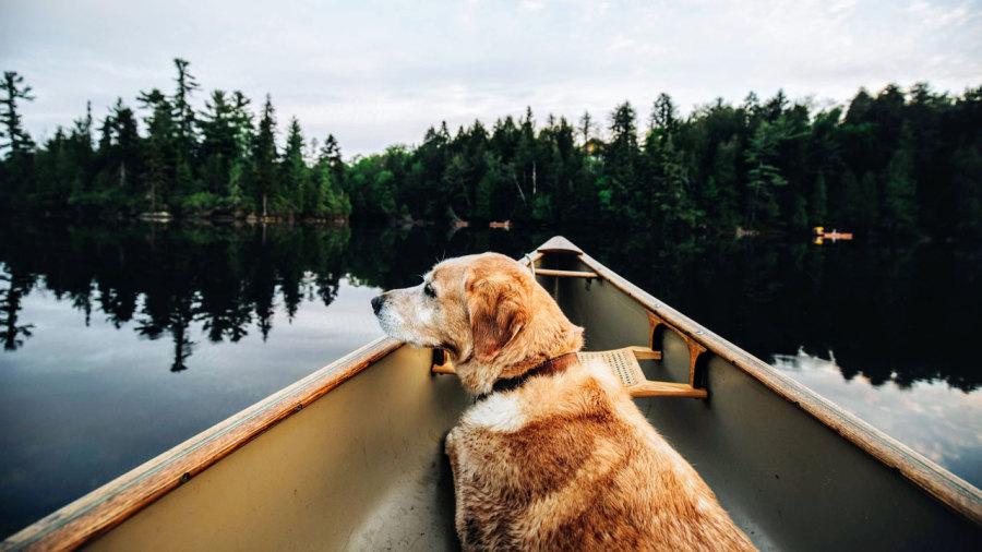 Bientôt plus de rivières accessibles en canot et en kayak