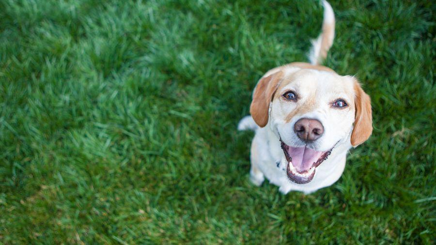Défis pour chiens (et maitres) hyperactifs