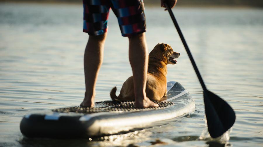Chienne de vie : surf à pagaie avec Toutou