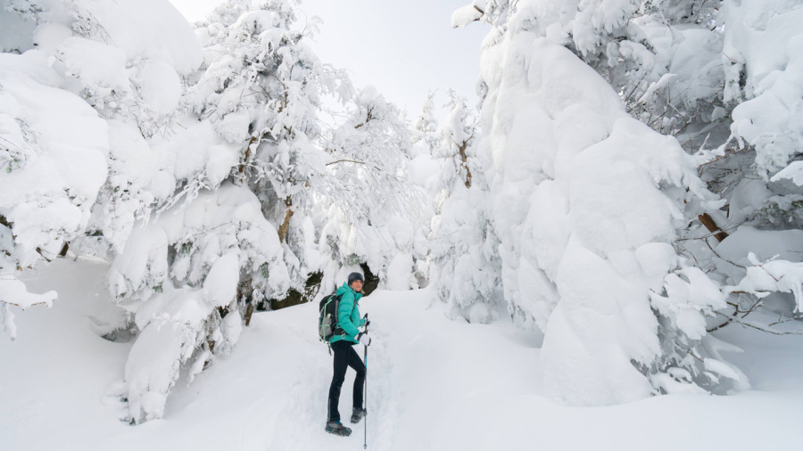 Randonnée à Sutton parmi les fantômes de neige