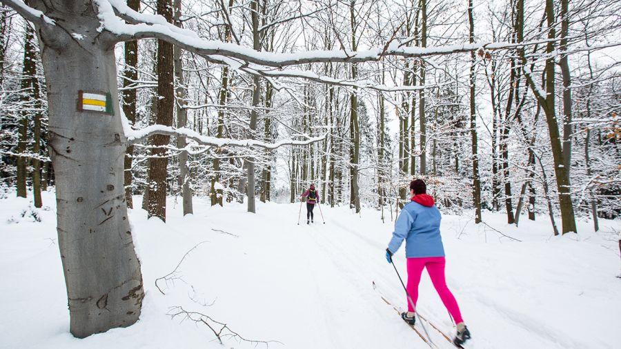 Ski de fond aux vergers Denis Charbonneau