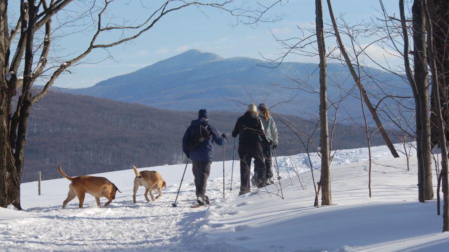 5 endroits où faire de la caniraquette cet hiver
