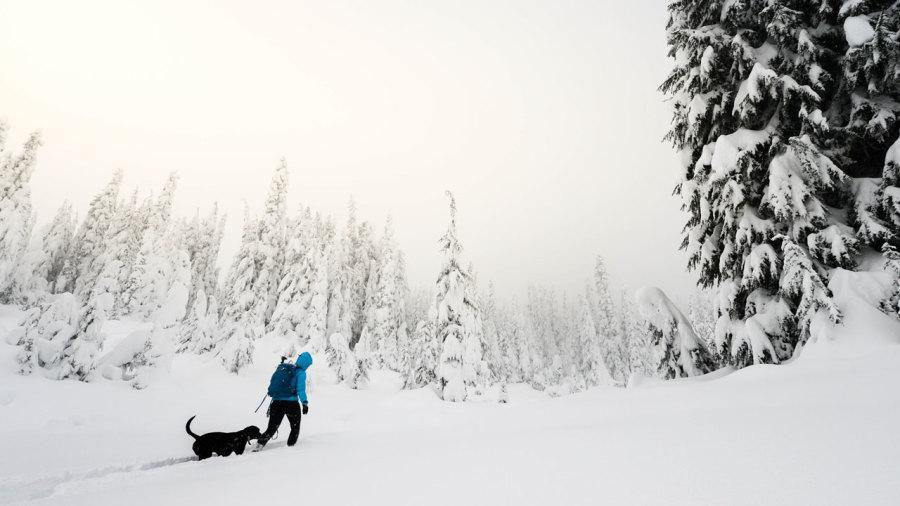 11 endroits où jouer dehors avec son chien cet hiver au Québec