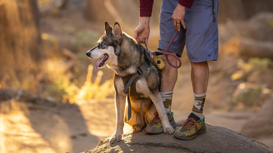 18 randonnées à faire avec son chien au Québec