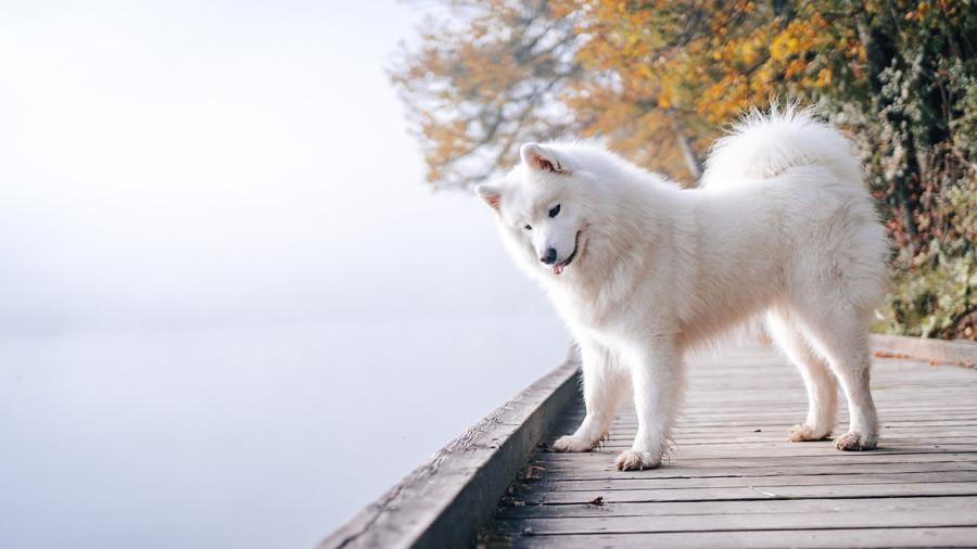 10 conseils pour une sortie sur l'eau réussie avec son chien