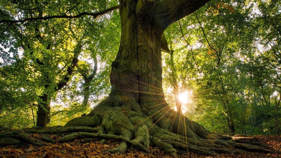Une déclaration des droits des arbres?
