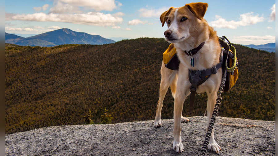 Ces réserves fauniques et zecs où randonner avec son chien