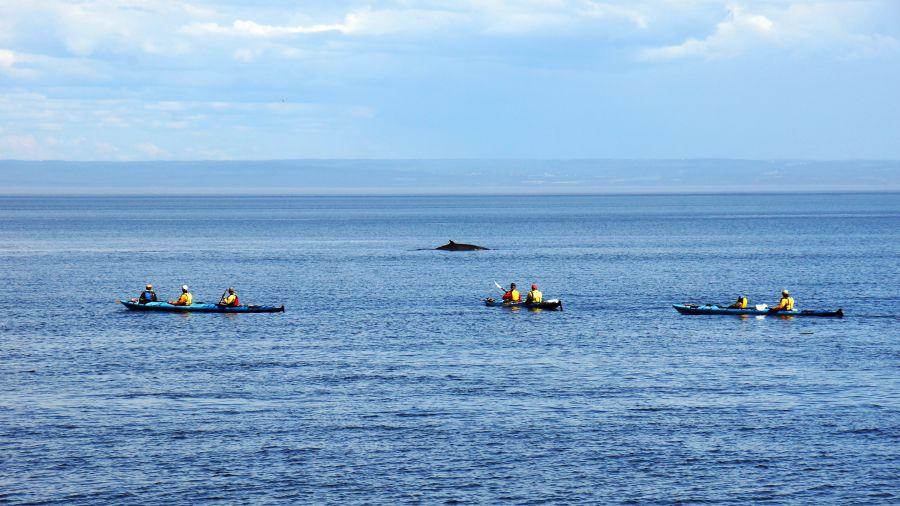 Québec : Kayak de mer à l'Isle-aux-Grues