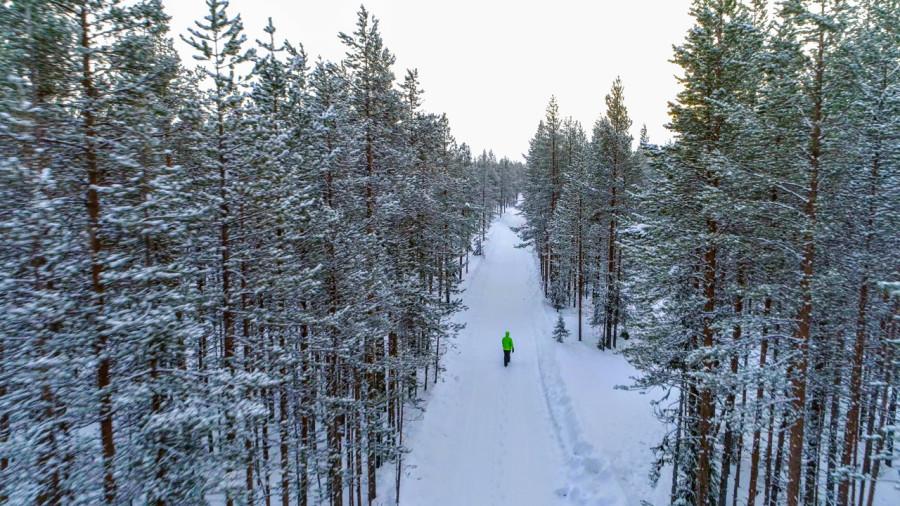 6 randonnées dans les plus belles forêts de conifères du Québec