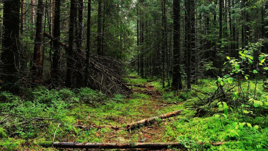 Randonnées de moins de 72 heures : Parc régional du Massif du Sud
