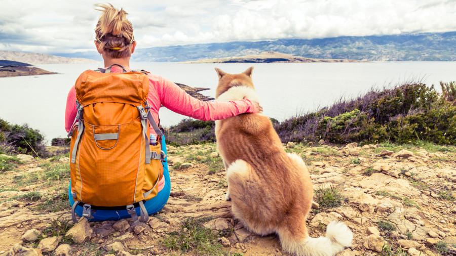 8 chiens au poil pour le plein air