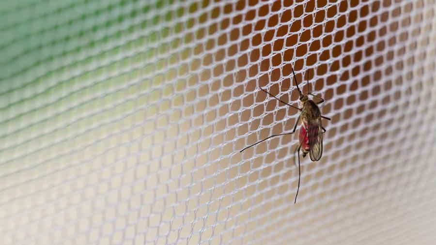 Meilleurs conseils pour éviter les moustiques en camping
