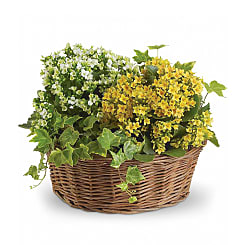 12'' Planter Basket - Flowers