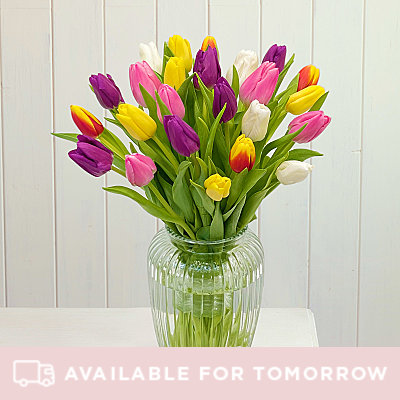 Rainbow Tulips - Flowers