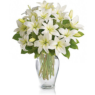 White Lily Serenity - Flowers