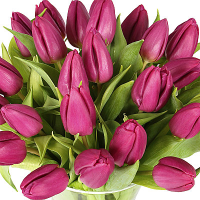 30 Purple Tulips - Flowers