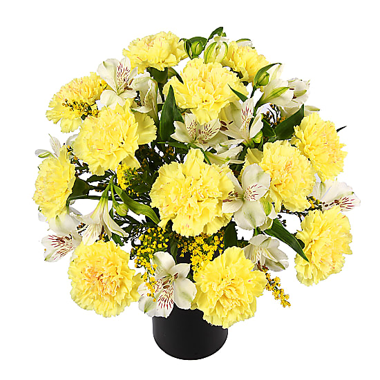 The Hypoallergenic Bouquet
