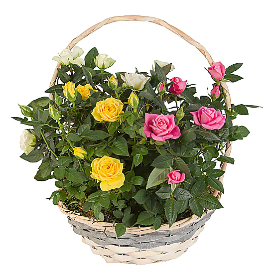 Mixed Rose Basket