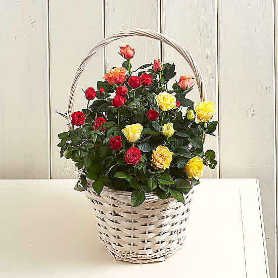 Sunset Roses Basket