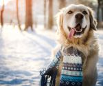 11 Winter Pet Health Hazards to Avoid