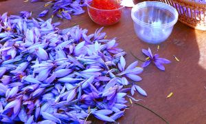 The Pain-Fighting Power of Saffron