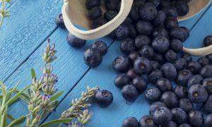 Antioxidant-Rich Blueberries: The Super Brain Food