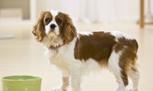 No Raw Deal for Your Pet