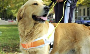 6 Service Dogs to the Rescue