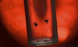 Know the Symptoms of Lyme Disease