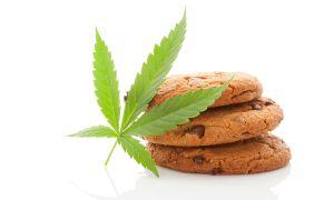 Avoid the Marijuana Cookie Monster