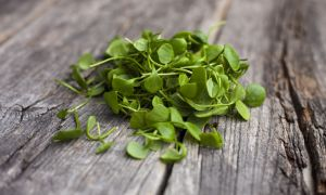 Go Wild for Watercress