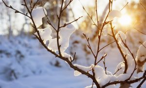 Understanding Seasonal Affective Disorder (SAD)
