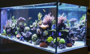 Avoid Red Tide in Your Home Aquarium