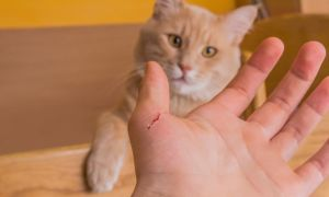 Cat Scratch Dangers