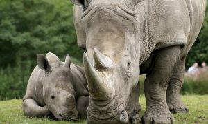 Are You a Captive Black Rhino?