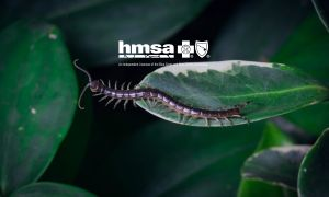Hawaii Health Alerts: Tips to Avoid Centipedes in Hawaii