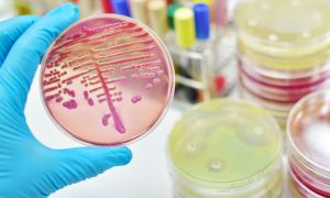 Targeted Cancer Treatment…and…What's Causing All These Outbreaks of Strange Diseases?