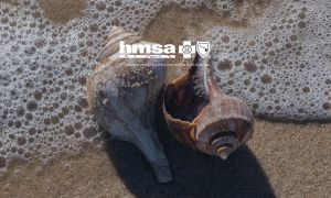 The Insider's Guide to Healthy Hawaii: Finding Peace Through Beachcombing