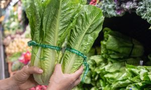 News: E. coli Illnesses From Romaine Hit 197, but End of Outbreak Appears to Be Over