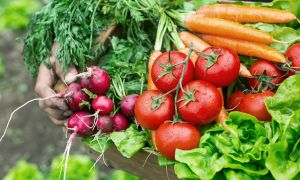 The Surprising Benefits of Growing Your Own Food